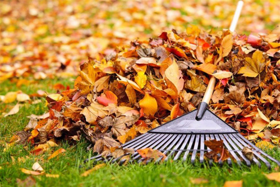 Уборка растительного мусора - часть мероприятий по уходу за классической лужайкой