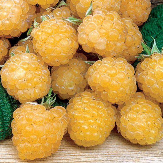 Желтая десертная