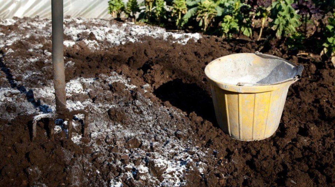 Внесение извести в кислую почву