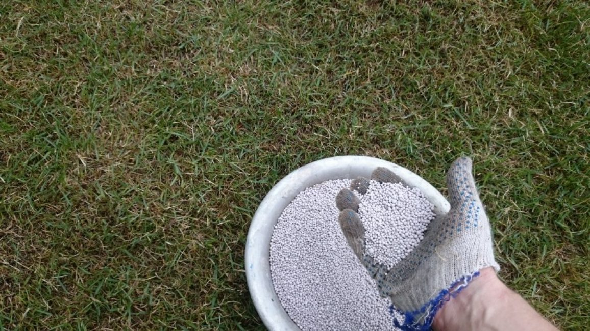 """Причиной """"неряшливого"""" вида травы может стать сильно закисленная почва, которая нуждается в известковании"""