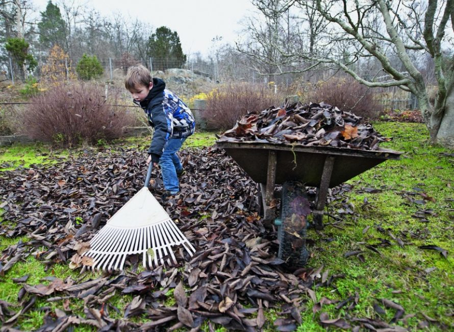 Уборка прошлогодней листвы при помощи веерных граблей