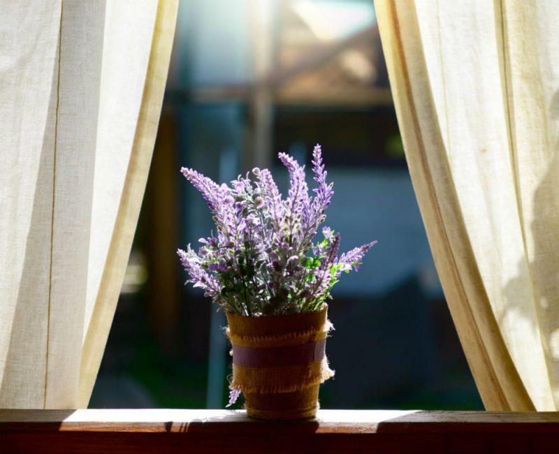 Красивое и ароматное оформление не только для сада, но и дома