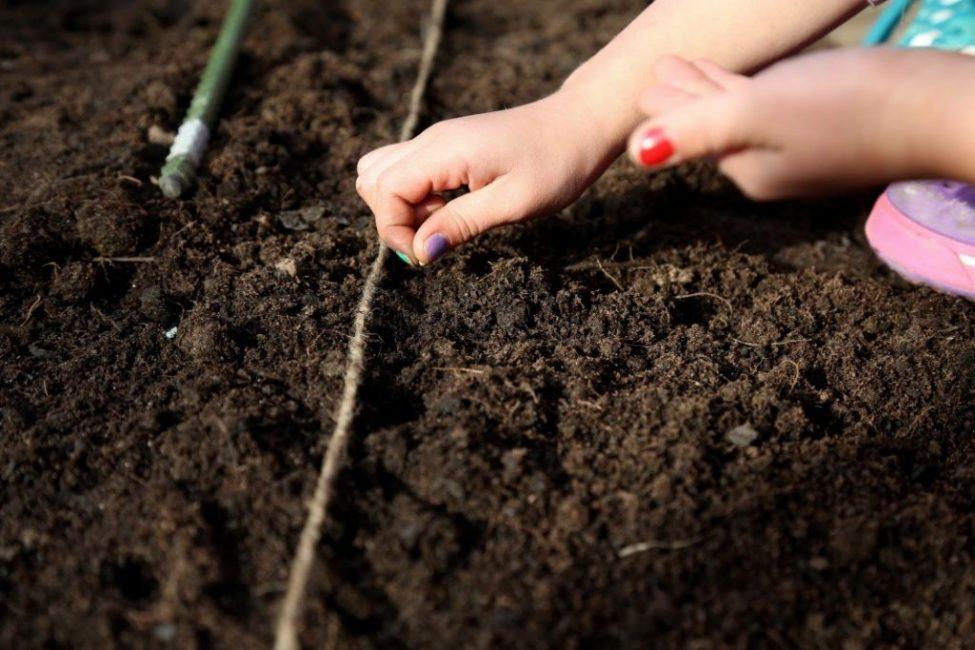 Посадка растений в несколько рядов при помощи веревочной метки