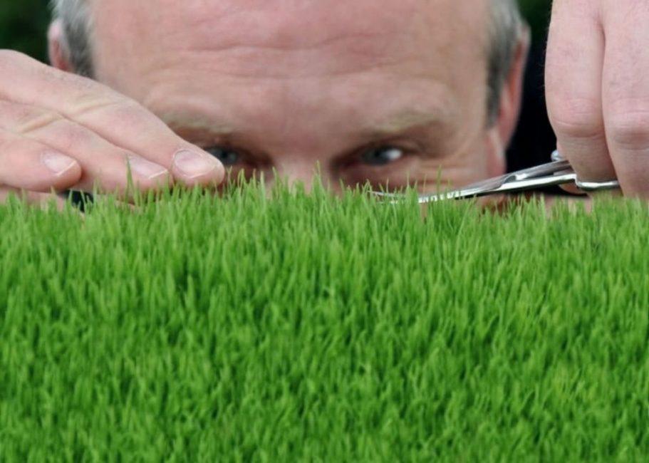 Проводить стрижку газона нужно регулярно, чтобы не травмировать растения