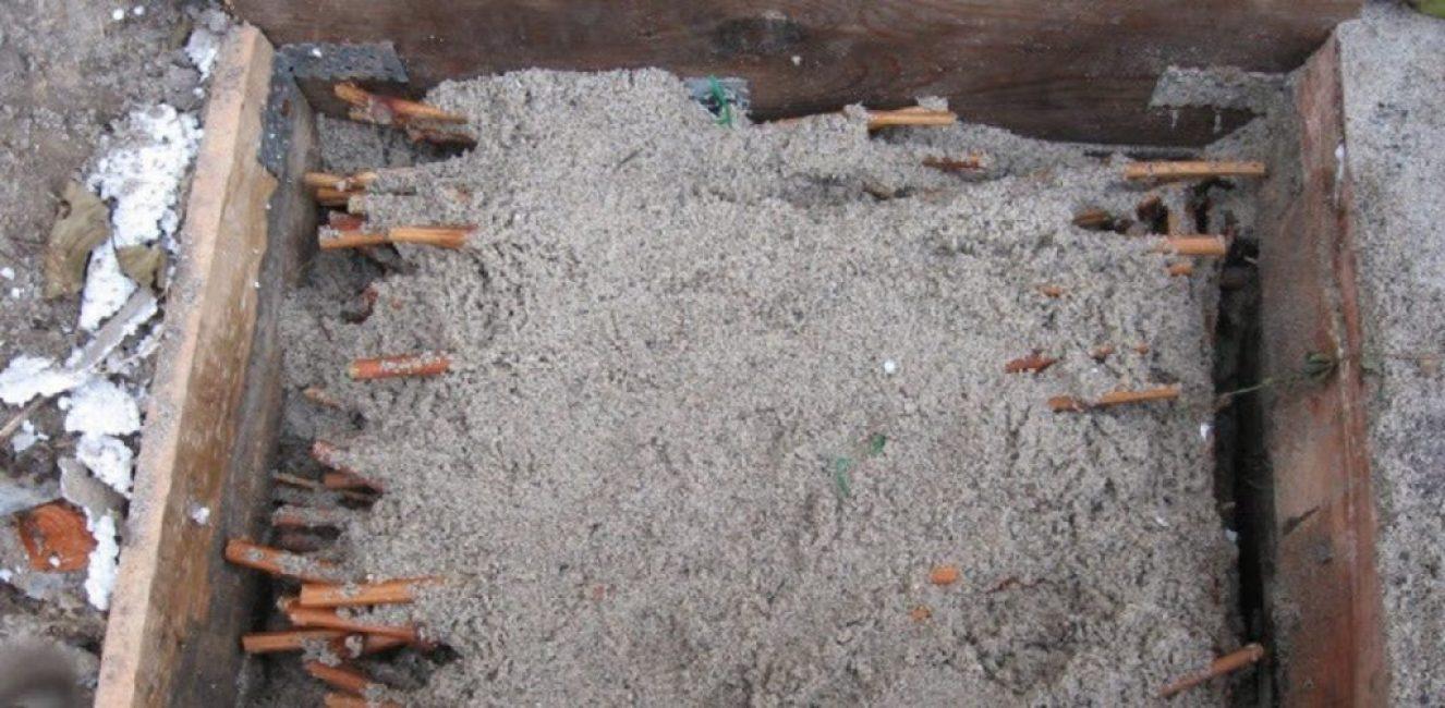 Хранение черенков в субстрате в условиях погреба
