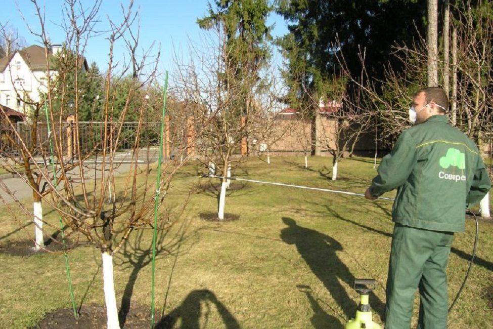 Опрыскивание растений ранней весной до появления листвы