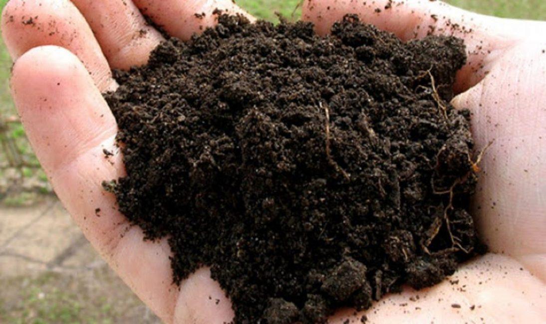 Переходный торф – лучшее средство для компоста