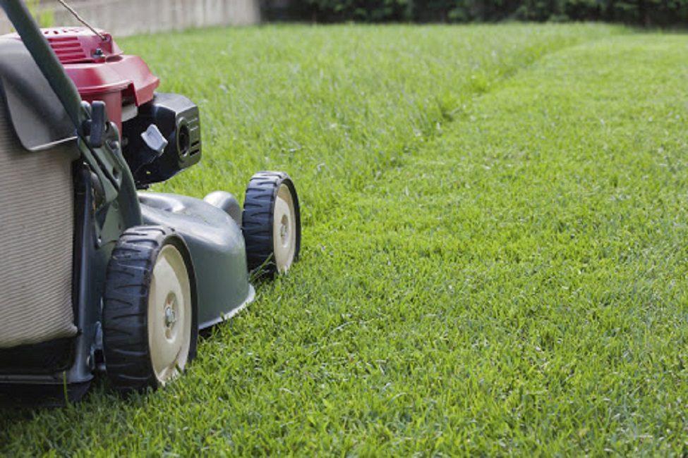 Подготовленная к зиме трава должна быть не выше 6-7 см.