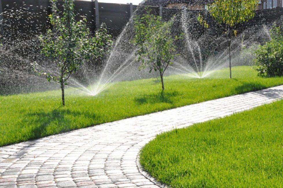 Правильный полив вернет газону первоначальный вид