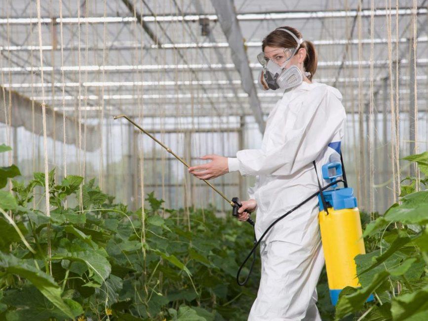 Способствуем лучшему росту растений