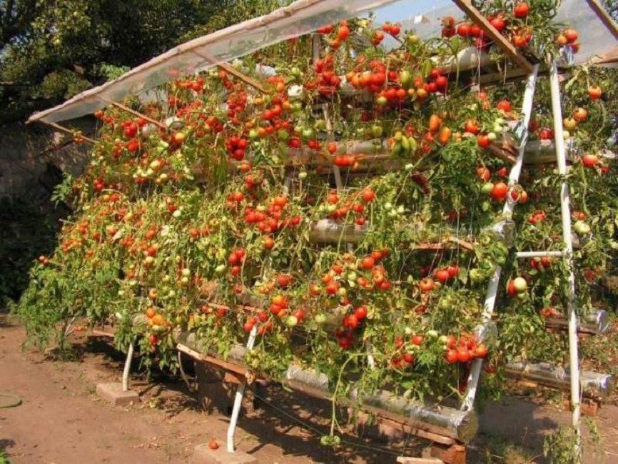 Стойка на огороде для выращивания ампельных томатов