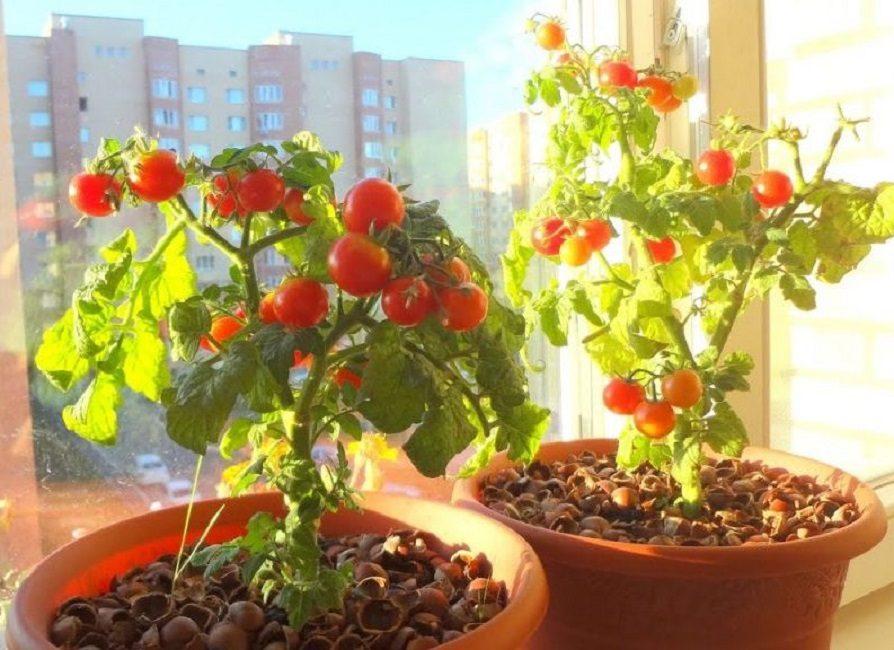 Тара для ампельных томатов урожайных сортов