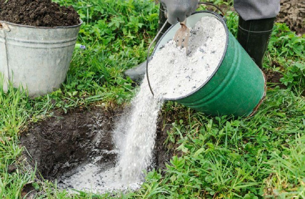 Внесение древесной золы в посадочную яму