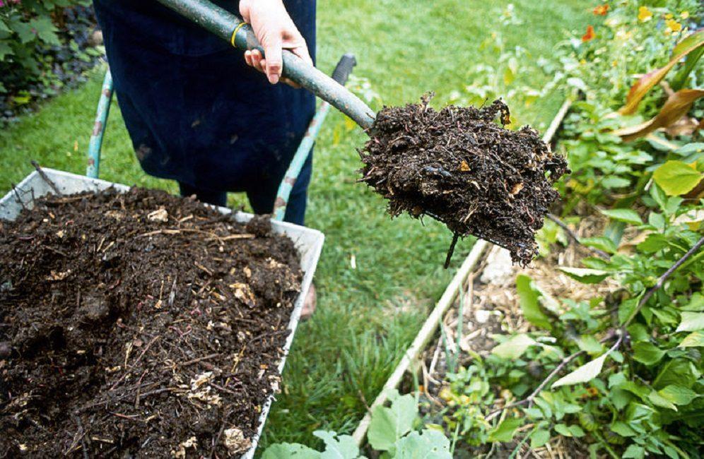 Внесение компоста на грядки