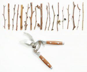 Заготовка черенков для прививки деревьев: основные сведения о черенках, когда заготавливать, хранение черенков в холодильнике | (Фото & Видео) +Отзывы