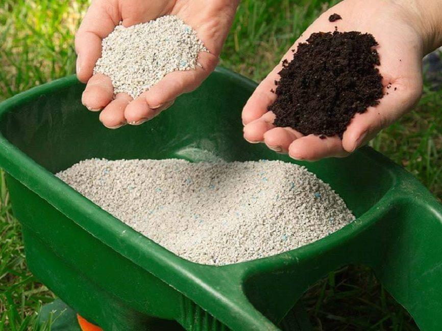 Злаковые травы нуждаются в дополнительном питании, подкормки им жизненно необходимы