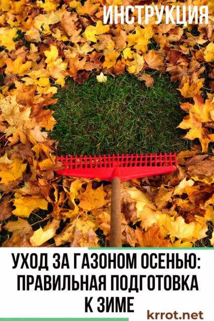 газонная трава уход осенью