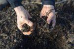 как раскислить почву на огороде