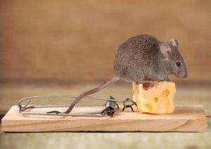 Как сделать мышеловку 🐭 своими руками? | Самый эффективный способ борьбы с грызунами