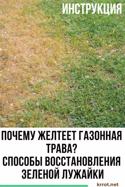 почему сохнет газонная трава