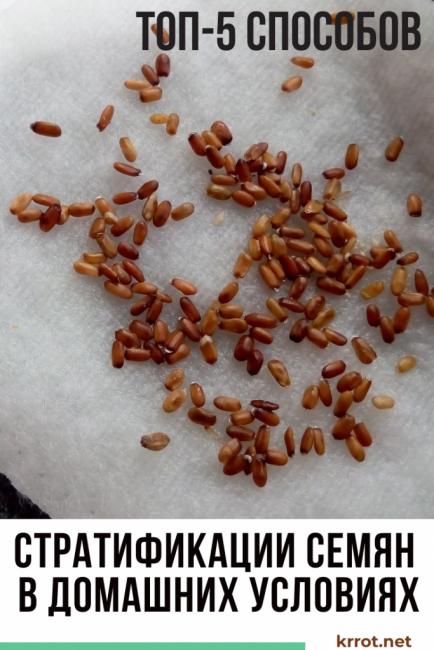стратификация семян +в домашних условиях