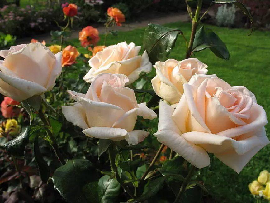 Осиана привлекательно выглядит в цветочных композициях