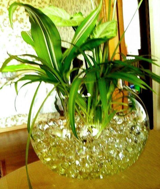 Один из современных методов выращивания комнатных растений