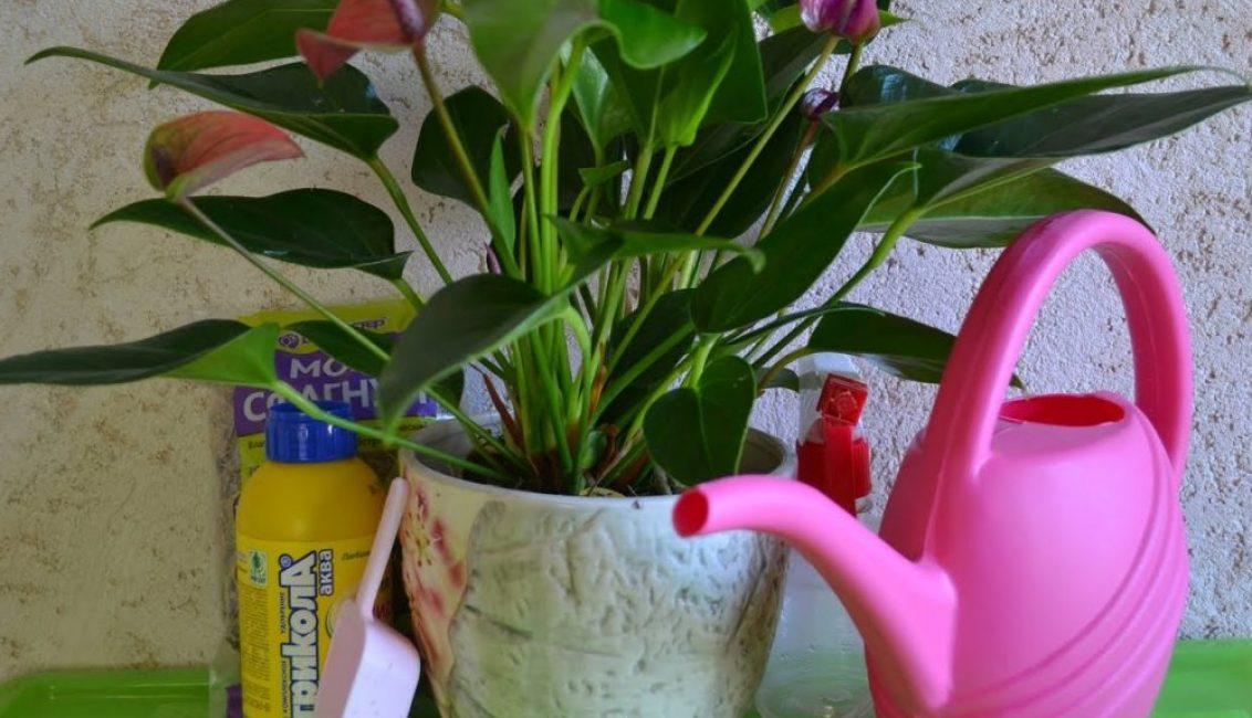 Тропическое растение нуждается в обильном увлажнении