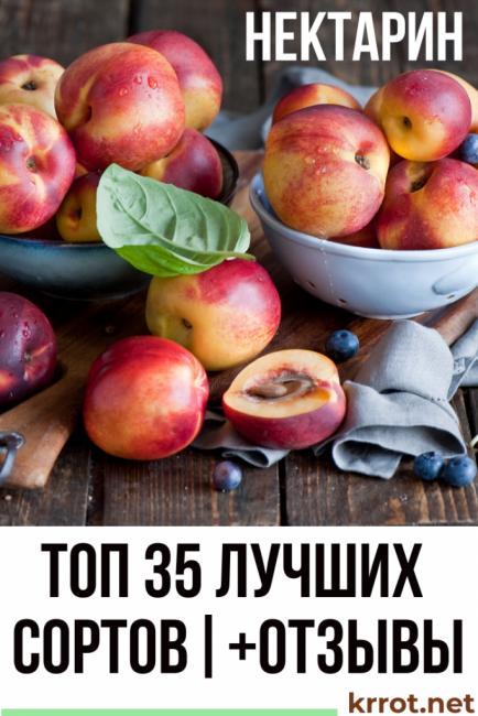 Нектарин: описание 35 сортов с фото и отзывами садоводов