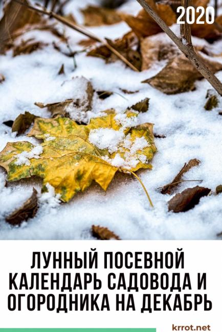 лунный посевной календарь декабрь