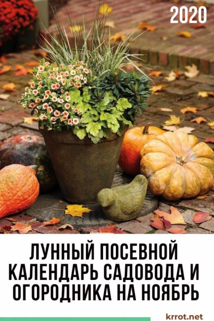 лунный посевной календарь ноябре