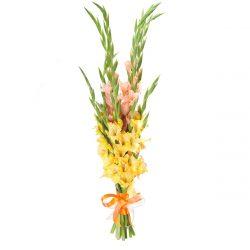 Гладиолусы — осеннее пышноцветие: описание, классификация сортов, посадка в открытый грунт и уход (90 Фото & Видео) +Отзывы