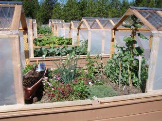 Как сделать парник своими руками: для рассады, огурцов, помидоров, перцев и др. растений. Из поликарбоната, оконных рам, пластиковых труб (75 Фото & Видео) +Отзывы