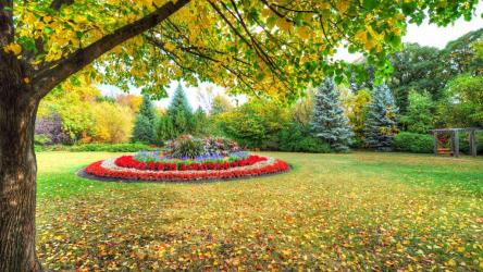 Осенние цветы в саду: каталог с фото и названиями | ТОП-30 Лучших