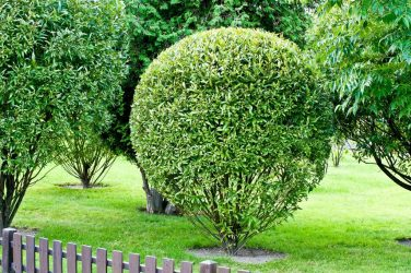 ТОП-22 Самых популярных и некапризных декоративных кустарников для дачи или частного дома (90 Фото & Видео) +Отзывы