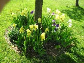 Что посадить под деревьями: цветы, растения или овощи? В огороде или саду в тени (40+ Фото & Видео)+Отзывы