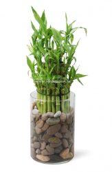 10 сортов бамбука для выращивания в России: описание, уход в домашних условиях и его особенности, размножение (Фото & Видео) +Отзывы
