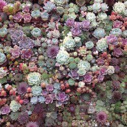 Суккуленты: описание, особенности выращивания из семян, посадки, размножения и ухода в домашних условиях, полезные свойства (70+ Фото & Видео) +Отзывы