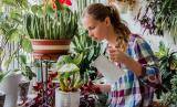 Как избавиться от мошки в комнатных цветах и растениях? ТОП-10 способов включая народные средства   (Фото & Видео) +Отзывы