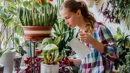 Как избавиться от мошки в комнатных цветах и растениях? ТОП-10 способов включая народные средства | (Фото & Видео) +Отзывы