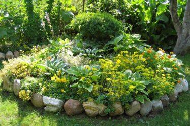 Молочай: домашний и садовый. Описание 22 популярных видов и сортов, агротехника растения, болезни и вредители (115 Фото & Видео) +Отзывы