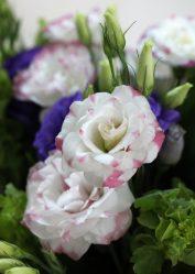 Эустома (Лизиантус) (100 Фото) — посадка и уход в домашних условиях. Необыкновенное растение в вашем саду +Отзывы