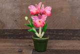 Орхидея дендробиум – уход в домашних условиях. Распространенные виды. Что делать с цветком после покупки? Правила ухода и размножения   (110+ Фото и Видео)
