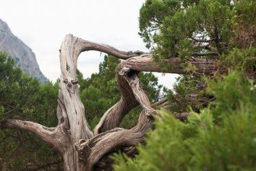 Можжевельник: описание 8 видов и 16 сортов, размножение и уход в открытом грунте и в домашних условиях  (120+ Фото & Видео) +Отзывы