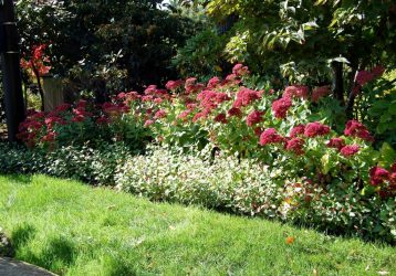 Очиток: виды и сорта для выращивания в домашних условиях и открытом грунте. Правила посадки и ухода за суккулентным растением (110+ Фото & Видео) +Отзывы