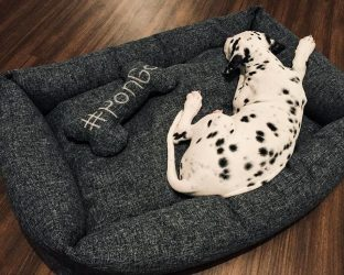 Лежанка для Собаки: описание ключевых моментов, пошаговые инструкции изготовления своими руками (140+ Фото & Видео) +Отзывы