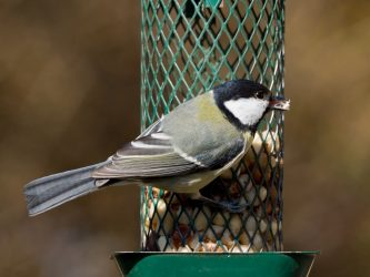 Как сделать кормушку для птиц своими руками? 19 оригинальных идей (180 Фото & Видео) +Отзывы