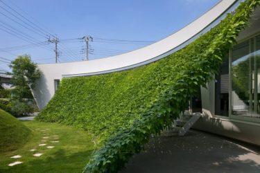 Быстрорастущая многолетняя живая изгородь: выбор растений, правила посадки, выращивания и ухода (Фото & Видео) +Отзывы
