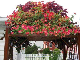 Как создать красивые цветники и клумбы на даче своими руками? (220 свежих фото и видео идей) +Отзывы
