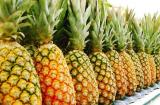 Ананас: описание, посадка и выращивание в домашних условиях, рецепты десертов (Фото & Видео) +Отзывы